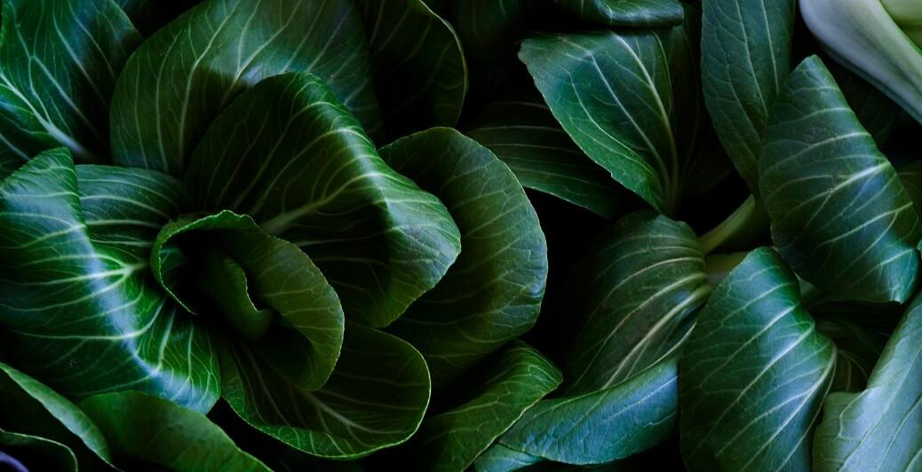 עלים ירוקים ועבים של צמח