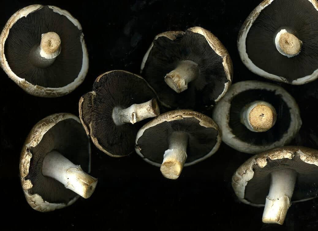 פטריות על רקע שחור